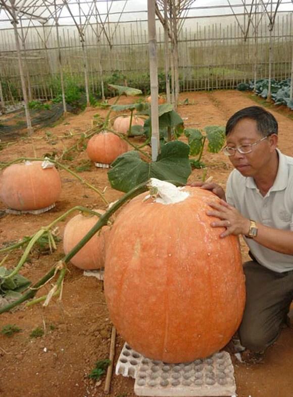 Hình ảnh Chanh 3kg gần nửa triệu, chuối nặng 2kg hút bà nội trợ Việt số 5
