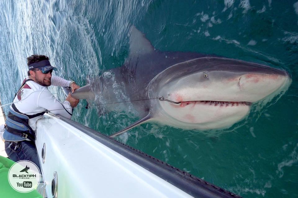 Hình ảnh Màn đối đầu nghẹt thở giữa VĐV cử tạ và con cá mập bò khổng lồ số 1