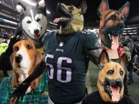 Philadelphia Costume Shops Scrambling For Dog Masks - Long ...