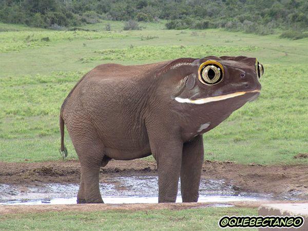 éléphant grenouille_resultat