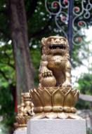 singa-lejonet
