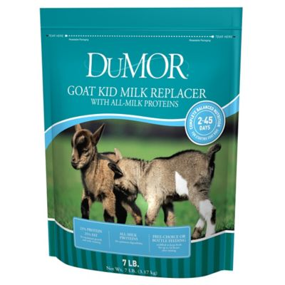 dumor blue ribbon kid