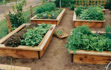 Learn How To Build A Raised Garden Bed