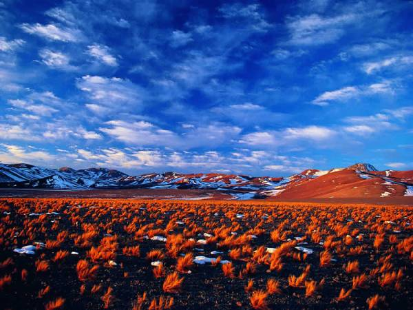 independent & group chile tours