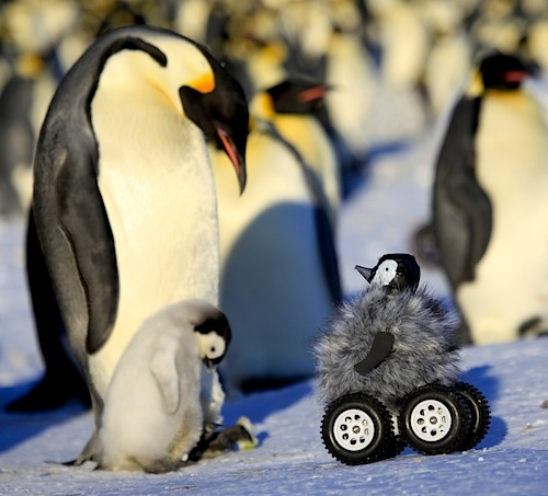 A Rover In Penguin's Clothing Causes Less Fuss