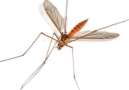 The Urban Legends Of Daddy Long Legs