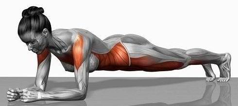 Kết quả hình ảnh cho core muscle plank
