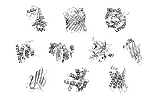Gdzie są formy przejściowe pomiędzy różnymi białkami