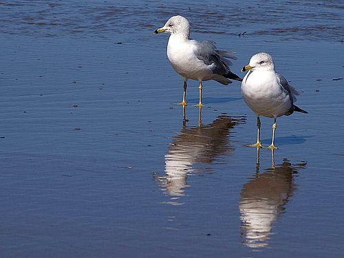 beach life animals seagulls lovesurf
