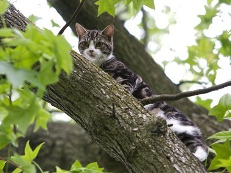pet sematary cat name