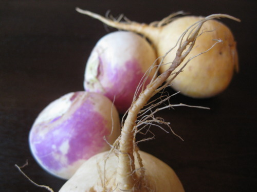 What S The Difference Turnips The Real Time Farms Blog
