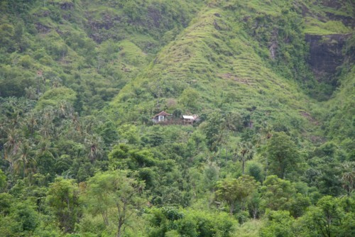 Amed jungle - Les 3 anges du temple des sources sacrees