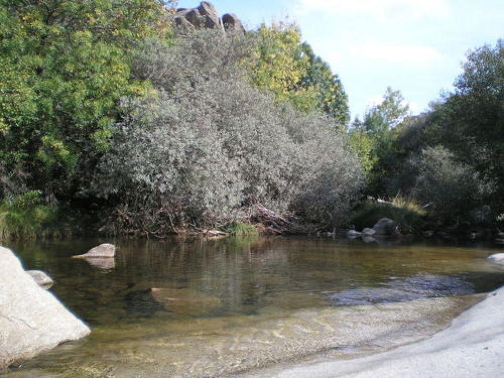 el río manzanares en la pedriza