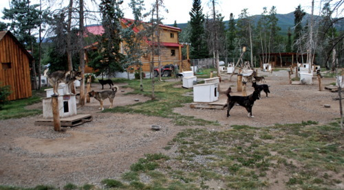 The main dog yard at Uncommon Journeys in the Yukon