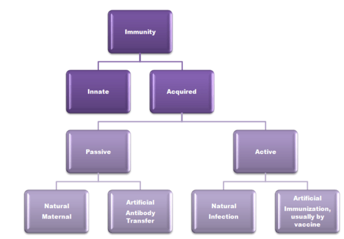 Actively and Passively acquired Immunity  Laboratory Science Review