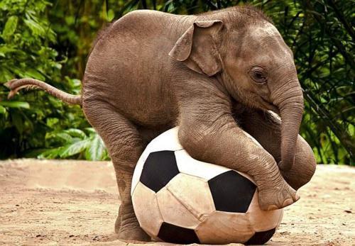 Happy Elephant 6