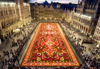 Hollie The Florist - Flower Carpet of Brussels
