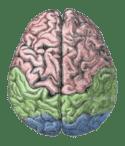 Brain training games don't work