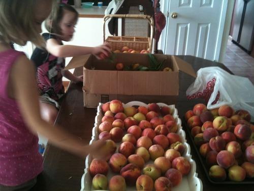 Eating Local - Peaches from a friend's farm