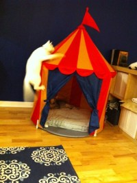 Welcome to the Coxpit (We got a child-size circus tent at ...