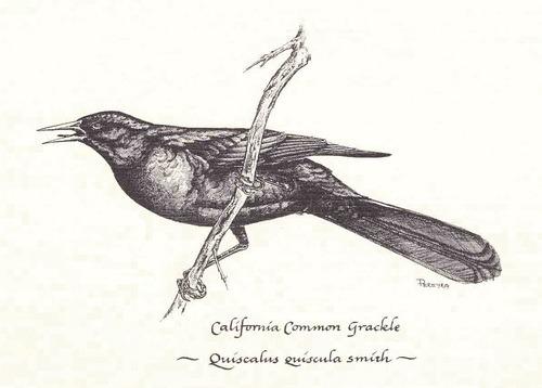 Macbeth bird imagery essay: Animals and birds » Wuthering