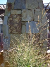 Ornamental grass near fire place