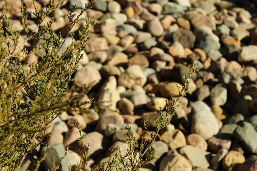 decorative stone with evergreen