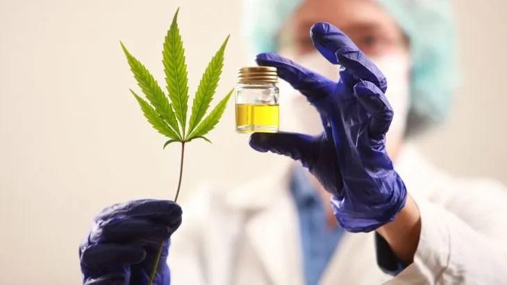 Cannabis medicinal abre las puertas a un nuevo rubro de exportación