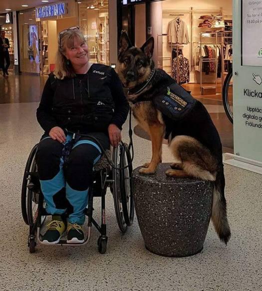 Online-möte om servicehundar