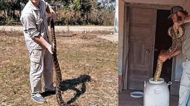 Heredó una casa de su abuela y se encontró con dos anacondas