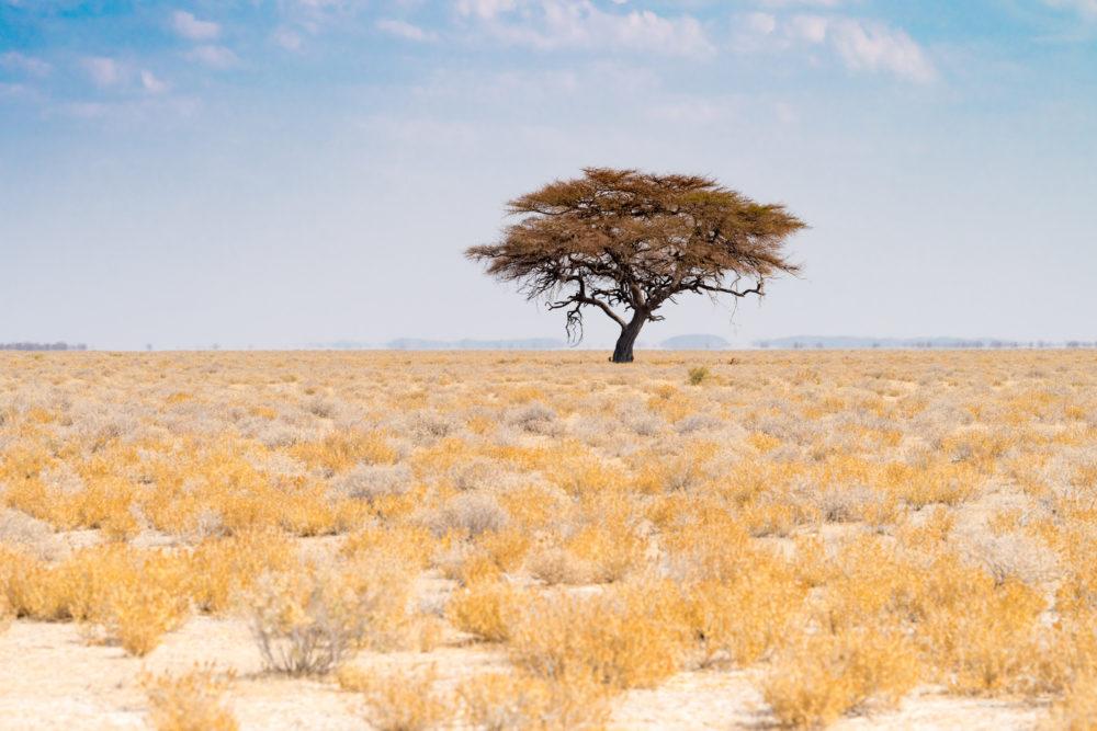 nationalparker i världen, nationalparker i Afrika, sevärdheter i Namibia, saker att göra i Namibia