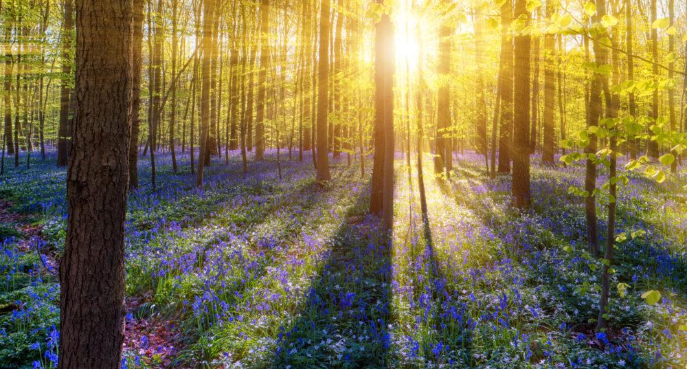 vackra skogar, resa till Belgien, resor till Belgien, resa till Bryssel, resor till Bryssel
