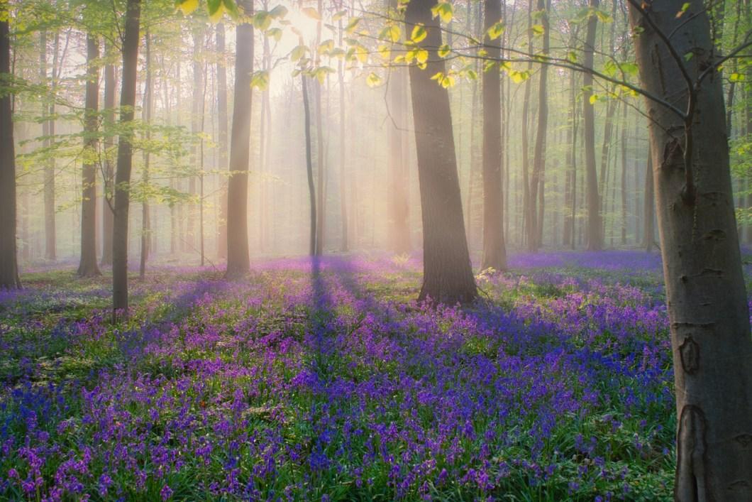 vackraste skogarna i världen, skogar i Belgien, resa till Belgien