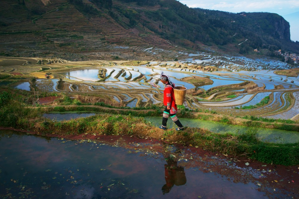 världsarv i Kina, kulturupplevelser i Kina, Kinaresor, resa till Kina, världens vackraste risterrasser