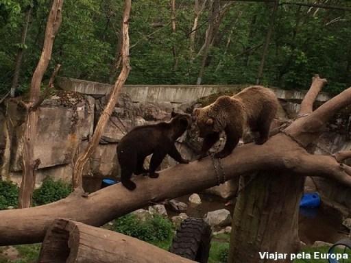 Ursos no Skansen.