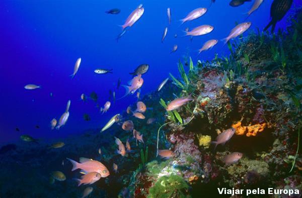 Peixes lindos no fundo do mar de Creta.