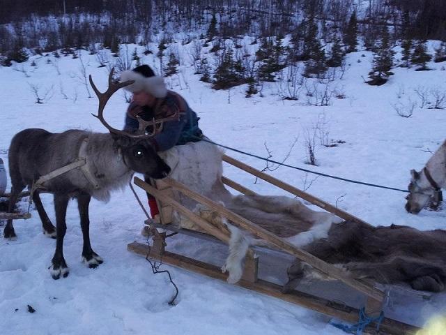 Passeio com renas em Tromsø