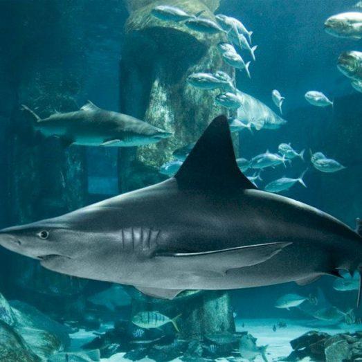 Crédito: Sea Life London Aquarium