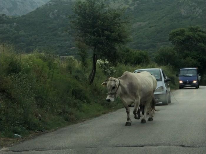 Roadtrip Europa/Balkan- Sammanfattning
