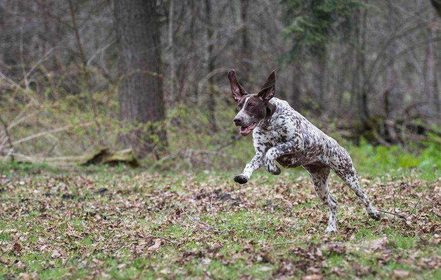 Fysträning hund VM Hundkurser