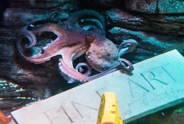 Octopus Art1