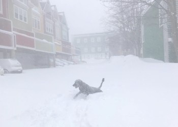 Canada's Government to Help Newfoundland Dig Out After Massive Blizzard