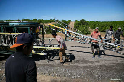 Mexican migrant workers carry ladders during a harvest at an oranges farm in Lake Wales, Florida, U.S., April 1, 2020. Picture…