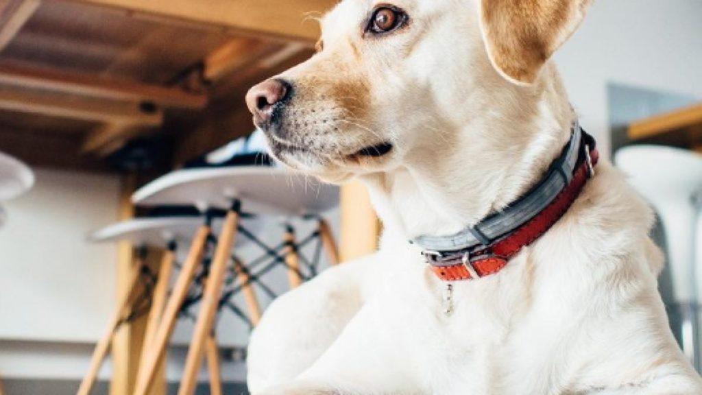 segni di cancro alla prostata del cane