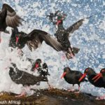 Review: Wildlife Photographer of the Year 2011