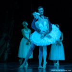 Review: Swan Lake – Not just Feathers and Frills