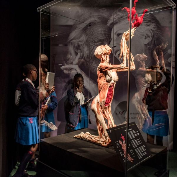 Body Worlds Vital - ' In Cape Town