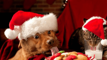 Pet Food Drive - Christmas Giving