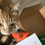 BOXIE for Pets – Curated Gifts