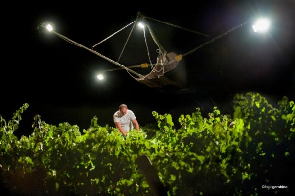 Night Harvest Chardonnay in Sicily at Donnafugata
